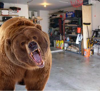 bear_in_garage