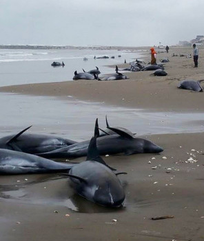 beached_whales