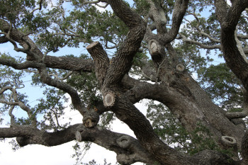 Tree_Branches