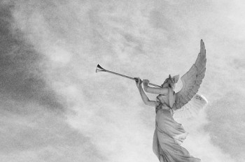 angel_trumpets