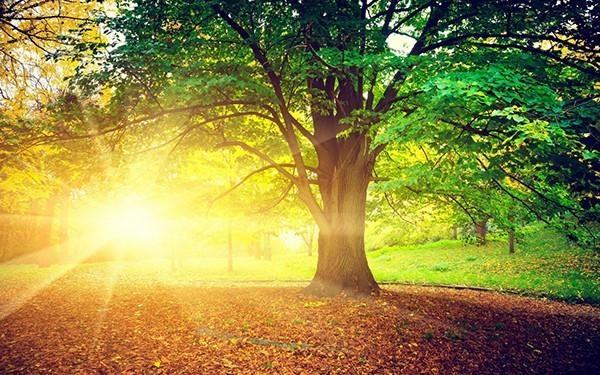 amazing_morning
