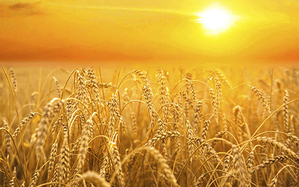 Harvest forex
