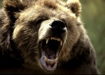 Giant Grizzly Bear Attacks in Late Spring