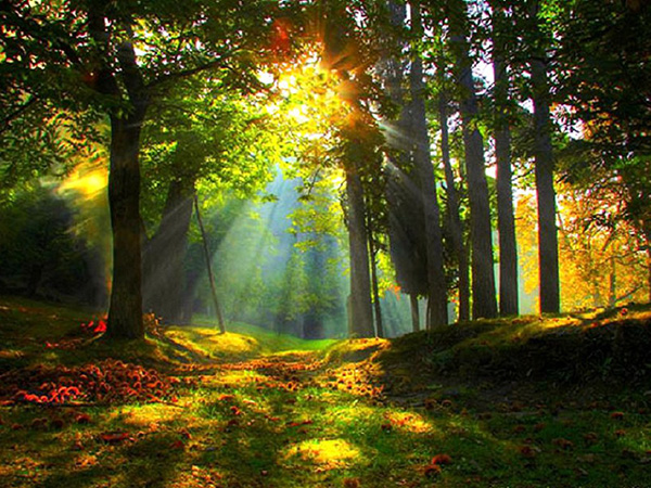 sunrise_forest