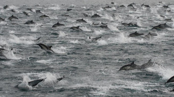 dolphins in san diego