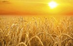 The Wheat Will Become Distinguishable from the Tares