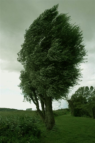 tree_blowing
