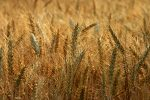 It's Time for the Wheat to Be Separated from the Chaff