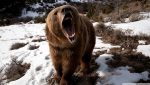 Prophetic Dream Reveals Large Bear Attack in Winter