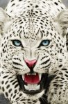 Encounter with White Snow Leopard Reveals Silver Prices Moving Higher