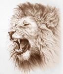 """The Lion of the tribe of Judah goes forth!"""