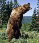 """I suddenly noticed a very angry, very large brown bear on a rampage, wanting to kill us."""
